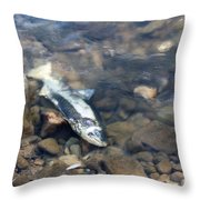 Dead Chinook Salmon Throw Pillow