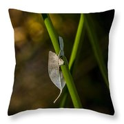 Dead Leaf On Reed Throw Pillow