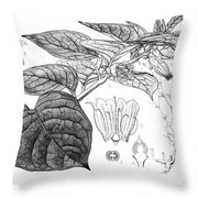 Deadly Nightshade, Medicinal Plant, 1830 Throw Pillow