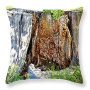Deadwood On Cherry Creek Trail 3 Throw Pillow