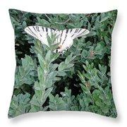 Dear Butterfly  Throw Pillow