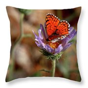 Death Valley Butterfly Throw Pillow