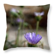 Death Valley Lavenders Throw Pillow