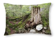 Decaying Tree Stump Throw Pillow