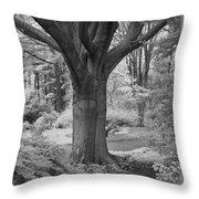 Deciduous Tree Ir Throw Pillow