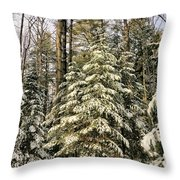 Deep In The Maine Woods Throw Pillow