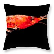 Deep Sea Shrimp Throw Pillow