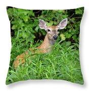 Deer Beauty II Throw Pillow