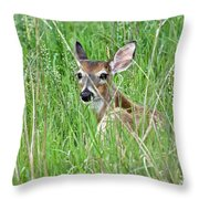 Deer Bedded Down During Mid Day Throw Pillow