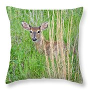 Deer Bedded Down In Grass Throw Pillow