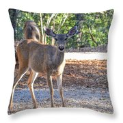 Deer Doe - 1 Throw Pillow