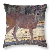 Deer Doe - 2 Throw Pillow