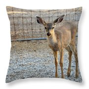 Deer Fawn - 1 Throw Pillow