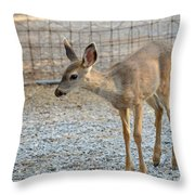 Deer Fawn - 2 Throw Pillow