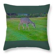 Deer Grazing In City Field Throw Pillow