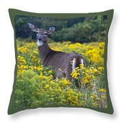 Deer In A Field Of Yellow Flowers Throw Pillow