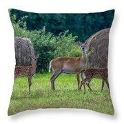 Deer In A Hay Field Throw Pillow