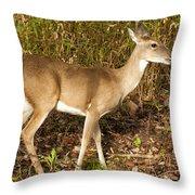 Deer In Morning Ligh Throw Pillow