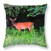 Deer In Overhang Of Trees Throw Pillow