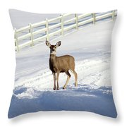 Deer In Snow Covered Road Throw Pillow