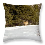 Deer In The Distance Throw Pillow