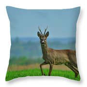 Deer On The Field Throw Pillow