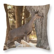 Deer On The Look Out Throw Pillow