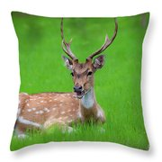 Deer Ruminating Throw Pillow