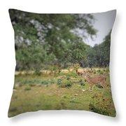 Deer48 Throw Pillow