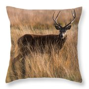 Deers Attention Throw Pillow