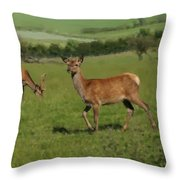 Deers On A Hill Pasture. Throw Pillow