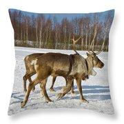 Deers Running On Snow Throw Pillow