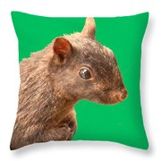 Definately Bright Eyed Throw Pillow