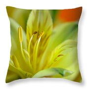 Delicate Darling Throw Pillow