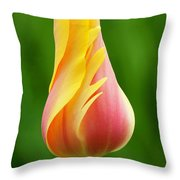 Delicate Folds Of A Tulip Throw Pillow