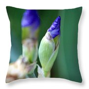 Delicate Missals 2 Throw Pillow