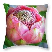 Delicate Pink Bud Waratah Flower Throw Pillow