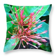 Delicate Pink Flower Throw Pillow