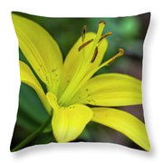 Delicate Yellow Oriental Lily Throw Pillow