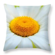Delightful Daisy Throw Pillow