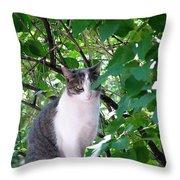 Demure Kitty Throw Pillow