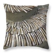 Denmark, Romo, Seashells, Razor Clams Throw Pillow