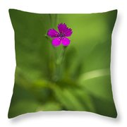 Deptford Pink Dianthus Flower Throw Pillow