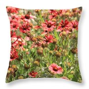 Desert Beauties Throw Pillow