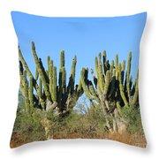 Desert Cacti In Cabo Pulmo Mexico Throw Pillow