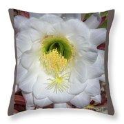 Desert Cactus 668 Throw Pillow