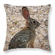 Desert Cottontail 1822 Throw Pillow