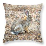 Desert Cottontail Throw Pillow