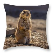 Desert Dawg Throw Pillow