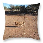 Desert Dog Throw Pillow